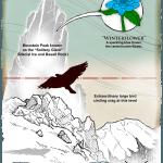winterflower diagram
