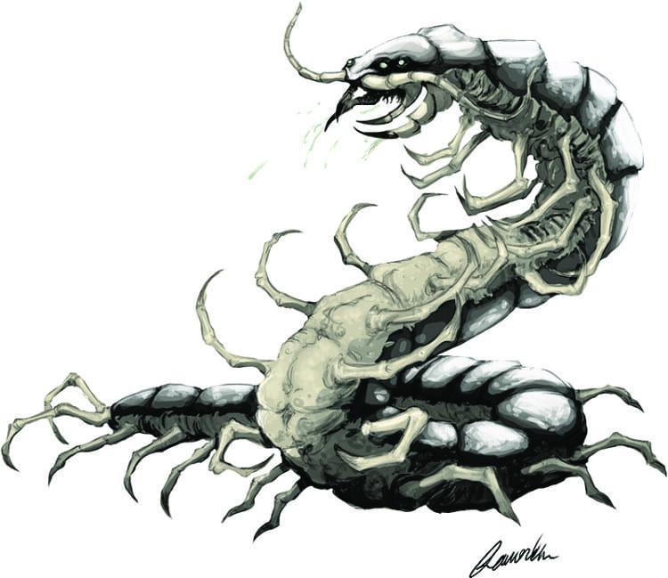 Albino Centipede