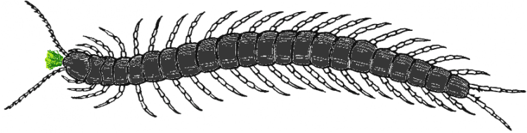 arson beetle