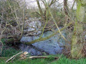 Stagnant_Pool_near_Bobbington,_Staffordshire_-_geograph.org.uk_-_378189