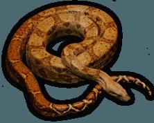 Snake jungle