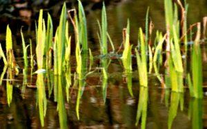klavekian grasslands flora