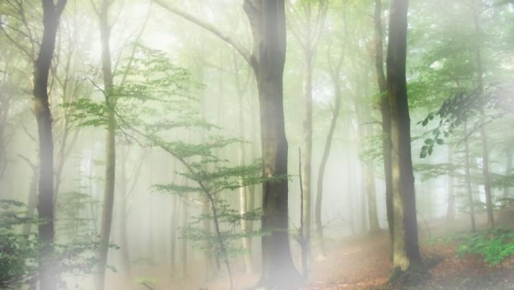 Converging Mists