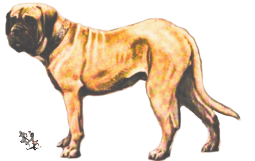 Enormous Hunting Dog